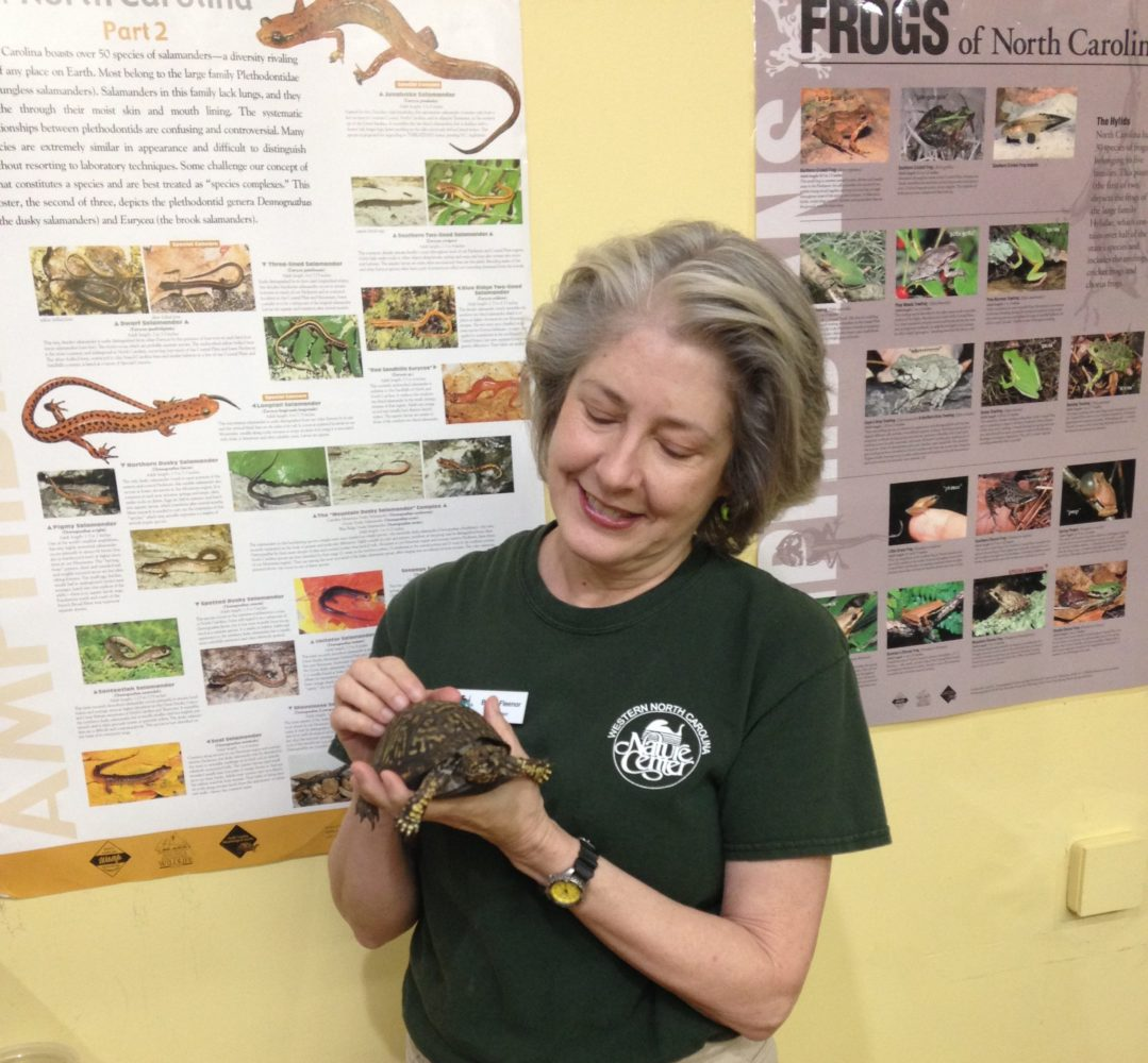 Nature Center volunteer holds a turtle