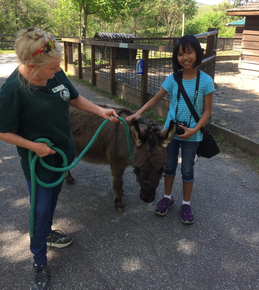 Volunteers with a donkey.