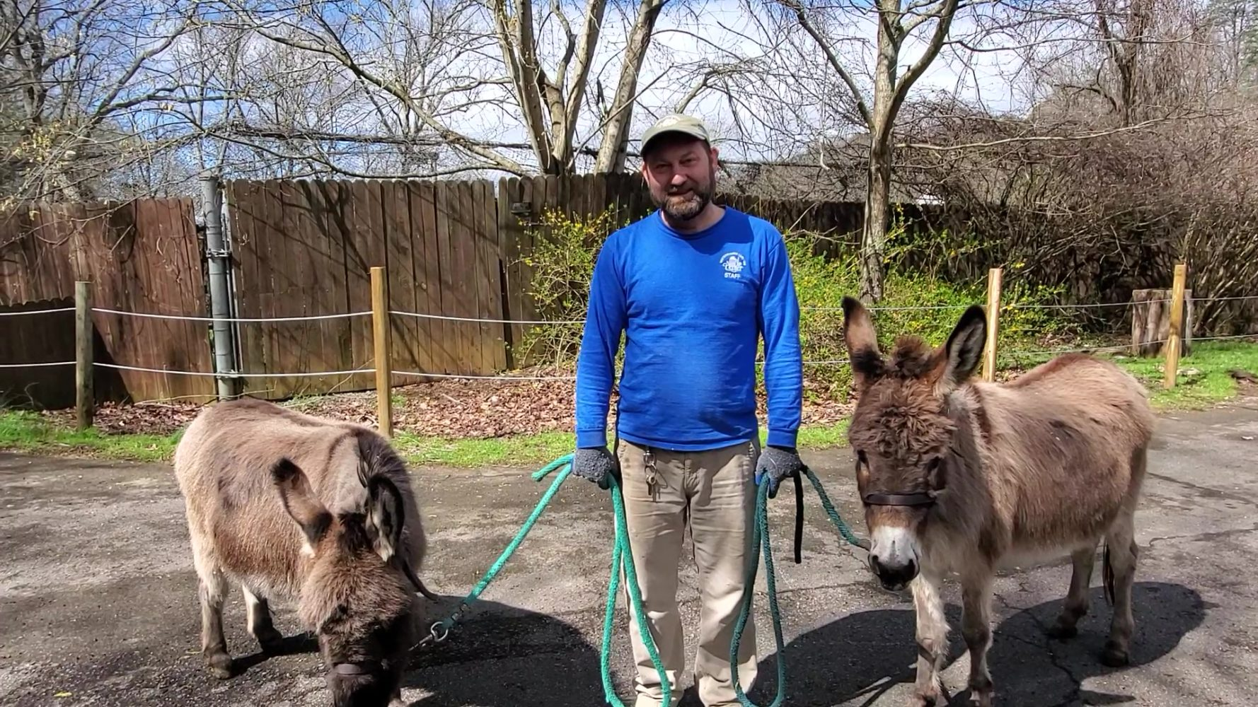 A Nature Center employee guides two donkeys.